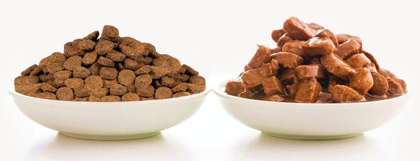Какой выбрать корм для щенков – сухой или влажный?