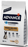 Advance French Bulldog