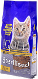 Nero Gold Cat Sterilized